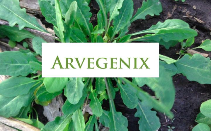 Arvegenix is Filling in the Gaps of Farming