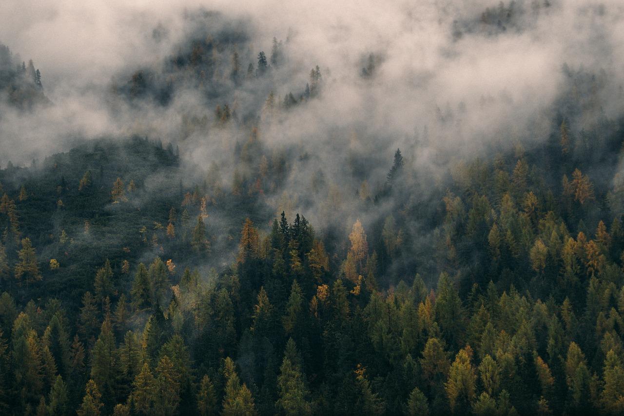 Has Deforestation Met Its Match?