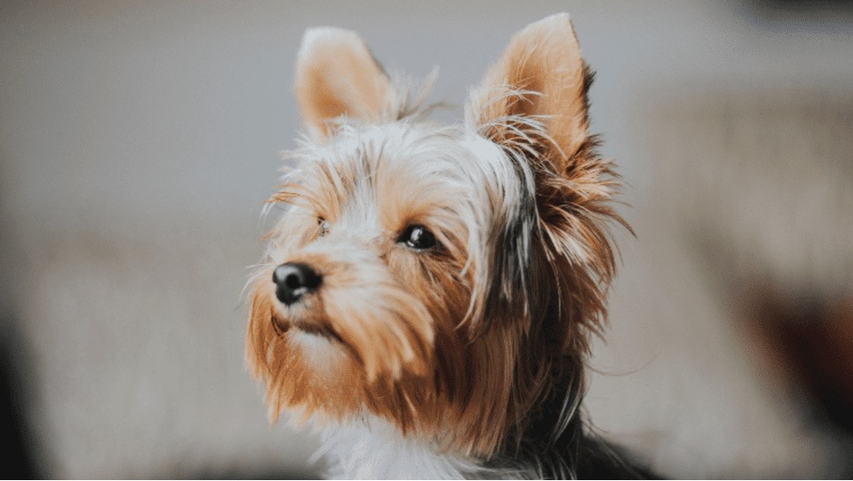 What Are the Best Dog Breeds for the Family?